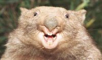 wombat.jpg